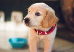 Comment donner un médicament à un chien ?