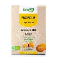 Herbalgem Propolis large spectre Gomme bio B/24 à PÉLISSANNE